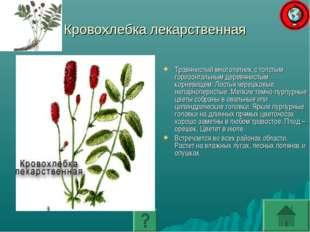 Кровохлебка лекарственная Травянистый многолетник с толстым горизонтальным де