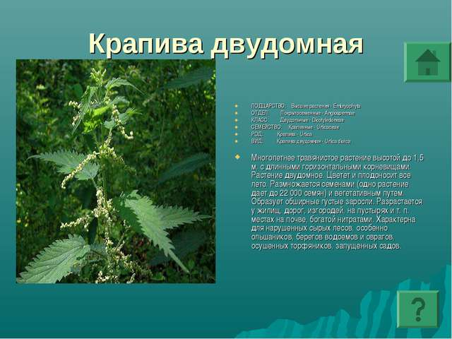 Крапива двудомная ПОДЦАРСТВО: Высшие растения - Embryophyta ОТДЕЛ: Покрытосем...