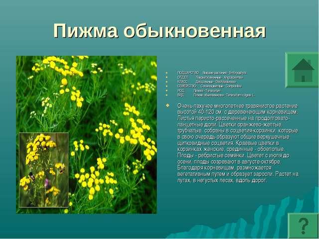 Пижма обыкновенная ПОДЦАРСТВО: Высшие растения - Embryophyta ОТДЕЛ: Покрытосе...
