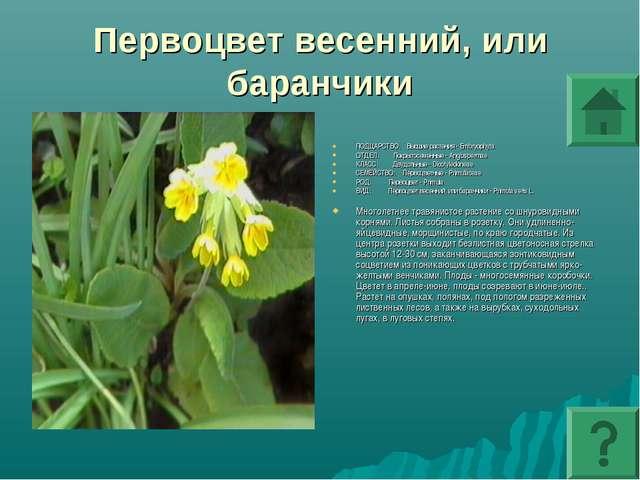 Первоцвет весенний, или баранчики ПОДЦАРСТВО: Высшие растения - Embryophyta О...
