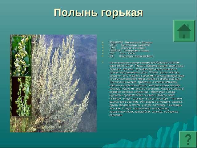 Полынь горькая ПОДЦАРСТВО: Высшие растения - Embryophyta ОТДЕЛ: Покрытосеменн...