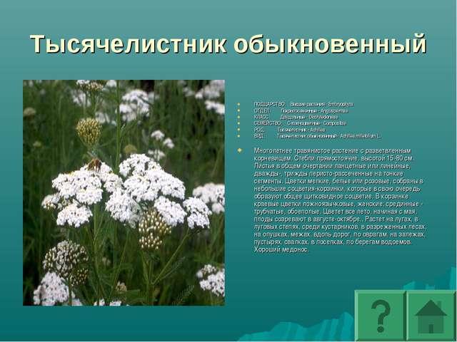 Тысячелистник обыкновенный ПОДЦАРСТВО: Высшие растения - Embryophyta ОТДЕЛ: П...