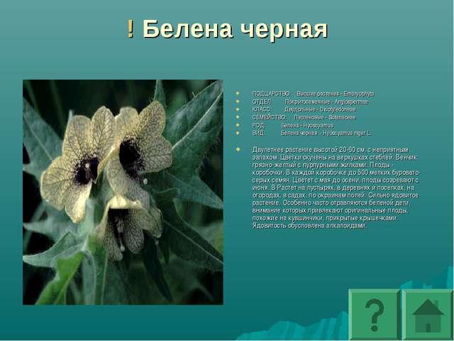 ! Белена черная ПОДЦАРСТВО: Высшие растения - Embryophyta ОТДЕЛ: Покрытосеме...