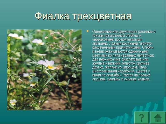 Фиалка трехцветная Однолетнее или двухлетнее растение с тонким трехгранным ст...