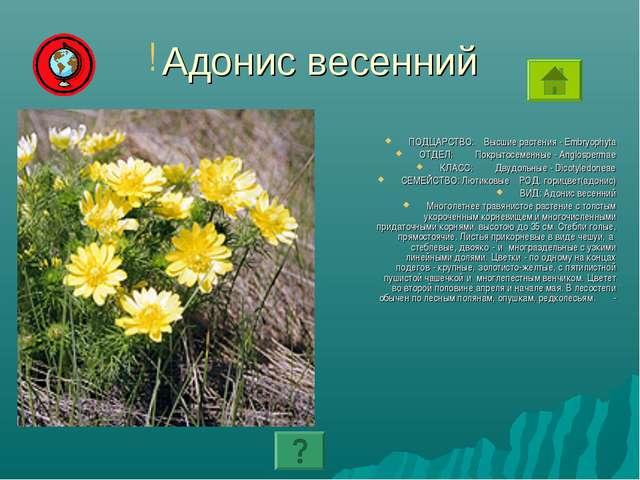 Адонис весенний ПОДЦАРСТВО: Высшие растения - Embryophyta ОТДЕЛ: Покрытосемен...