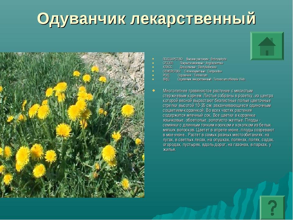 Одуванчик лекарственный ПОДЦАРСТВО: Высшие растения - Embryophyta ОТДЕЛ: Покр...