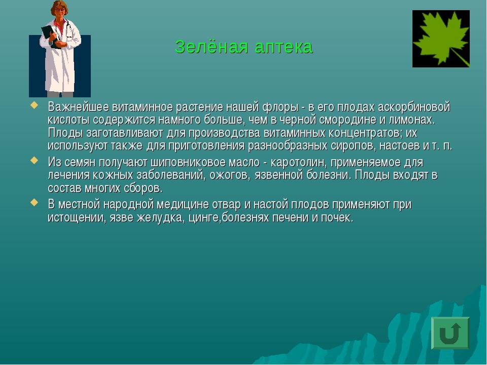 Зелёная аптека Важнейшее витаминное растение нашей флоры - в его плодах аскор...