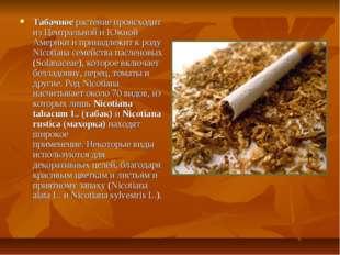 Табачное растение происходит из Центральной и Южной Америки и принадлежит к р