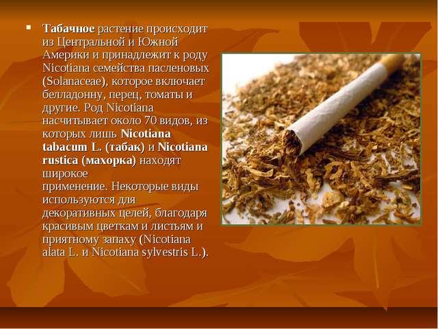 Табачное растение происходит из Центральной и Южной Америки и принадлежит к р...