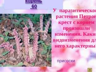 У паразитического растения Петров крест с корнем произошли изменения. Какие в