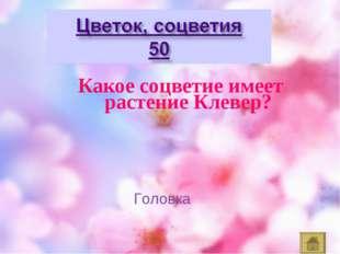 Какое соцветие имеет растение Клевер? Головка