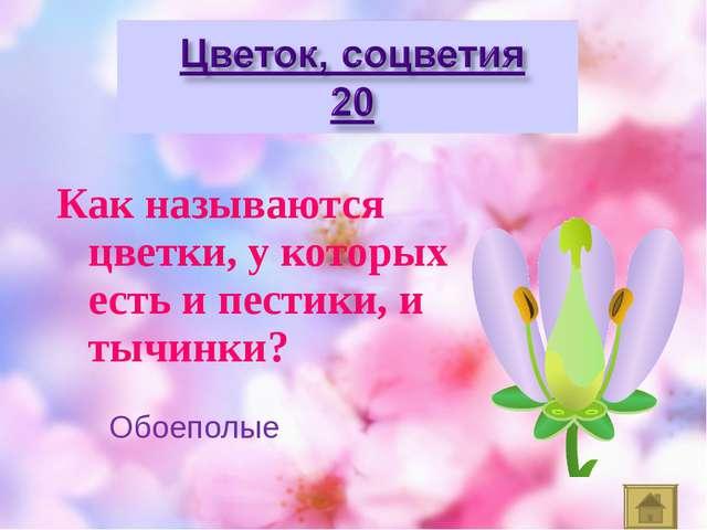 Как называются цветки, у которых есть и пестики, и тычинки? Обоеполые