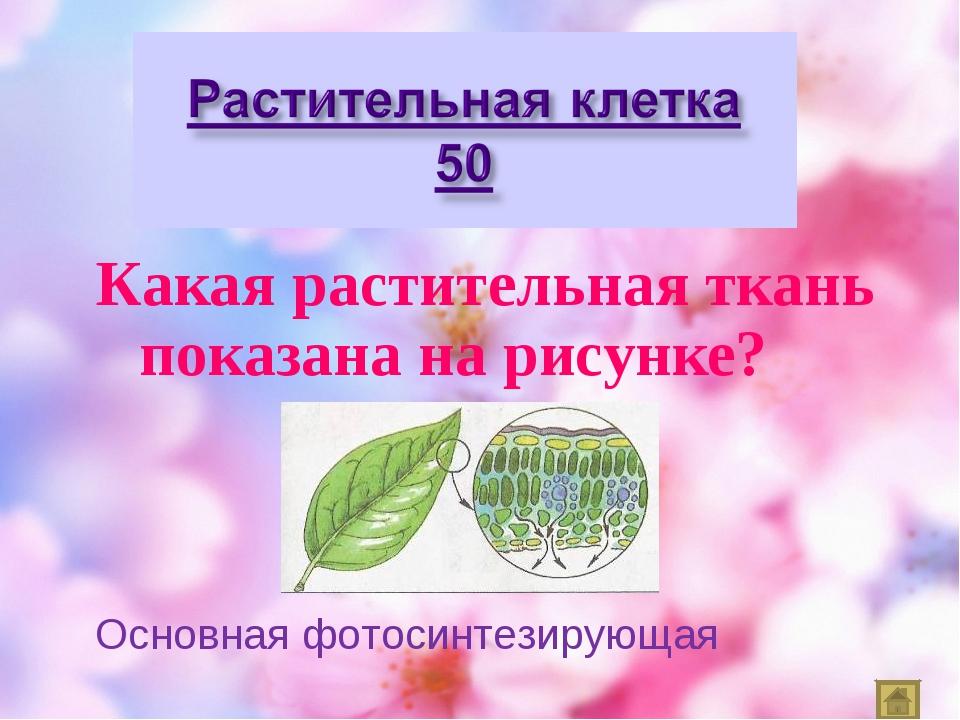 Какая растительная ткань показана на рисунке? Основная фотосинтезирующая
