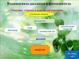 солнечная энергия фотосинтез кислород вода углекислый газ органические вещест