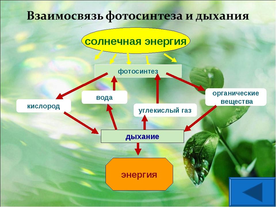 солнечная энергия фотосинтез кислород вода углекислый газ органические вещест...