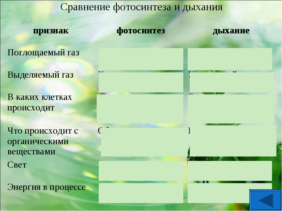 Сравнение фотосинтеза и дыхания признакфотосинтездыхание Поглощаемый газУг...