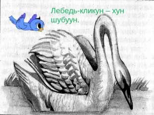 Лебедь-кликун – хун шубуун.
