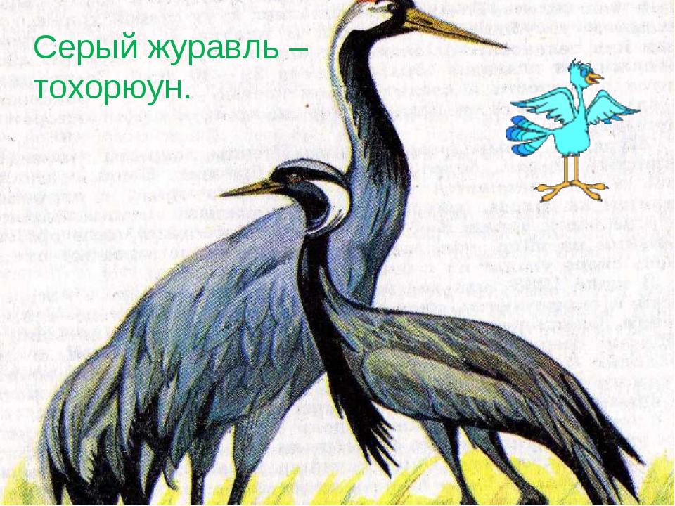 Серый журавль – тохорюун.