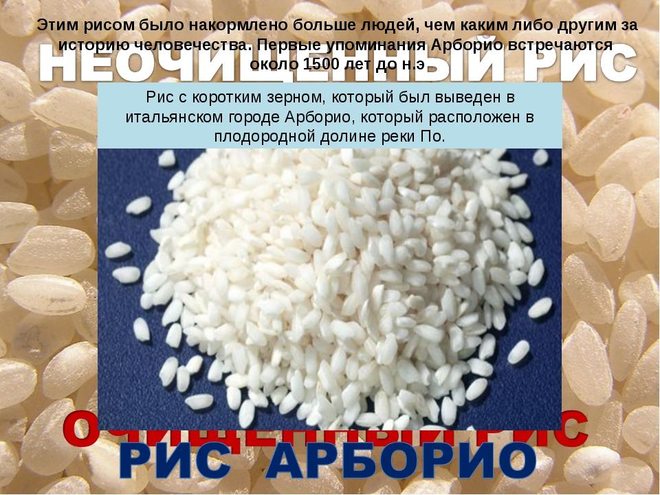 Этим рисом было накормлено больше людей, чем каким либо другим за историю чел...