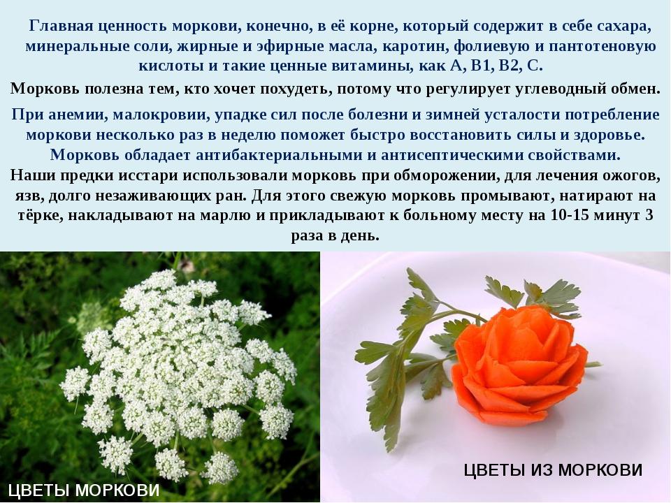 Главная ценность моркови, конечно, в её корне, который содержит в себе сахара...