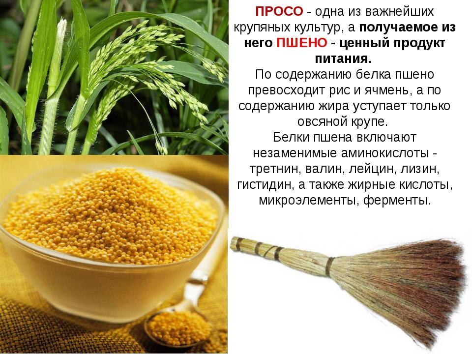 ПРОСО - одна из важнейших крупяных культур, а получаемое из него ПШЕНО - ценн...
