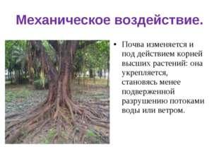 Механическое воздействие. Почва изменяется и под действием корней высших раст