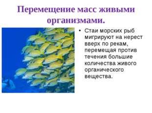 Перемещение масс живыми организмами. Стаи морских рыб мигрируют на нерест вве