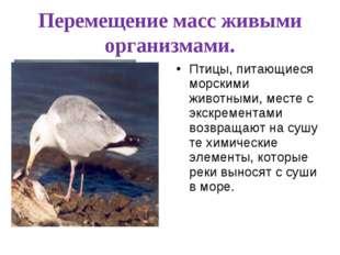 Перемещение масс живыми организмами. Птицы, питающиеся морскими животными, ме