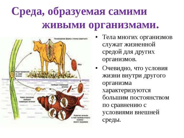 Среда, образуемая самими живыми организмами. Тела многих организмов служат ж...