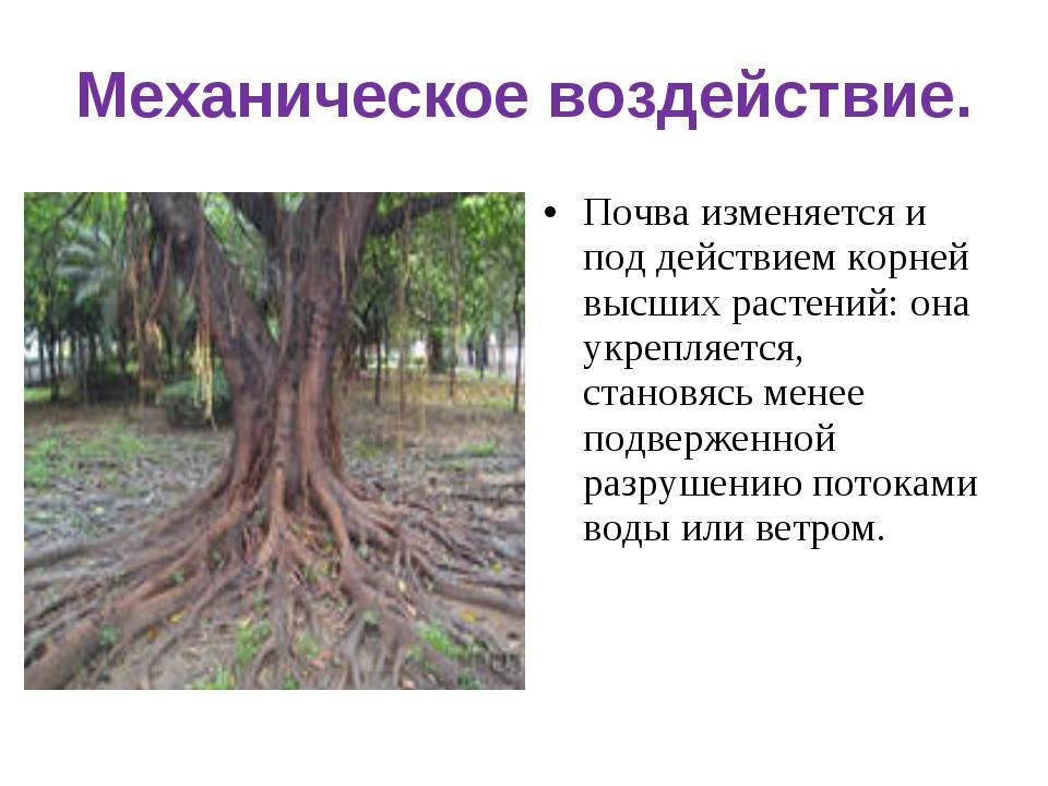 Механическое воздействие. Почва изменяется и под действием корней высших раст...
