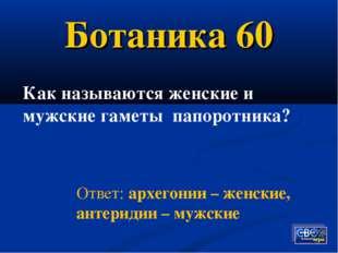 Ботаника 60 Как называются женские и мужские гаметы папоротника? Ответ: архег