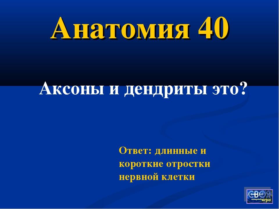 Анатомия 40 Ответ: длинные и короткие отростки нервной клетки Аксоны и дендри...