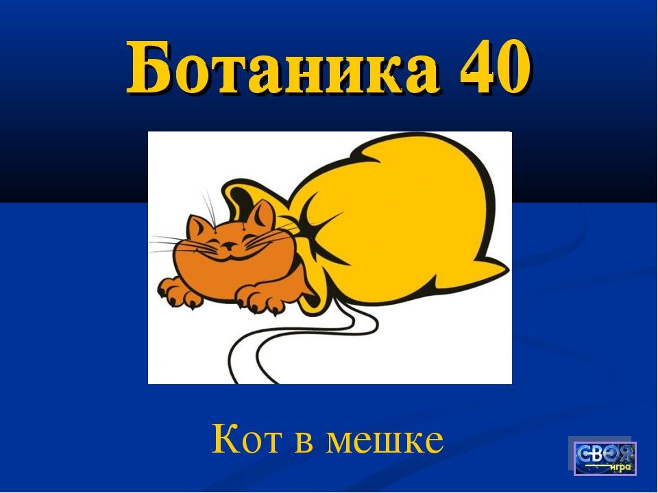 Ботаника 40 Кот в мешке Ботаника 40