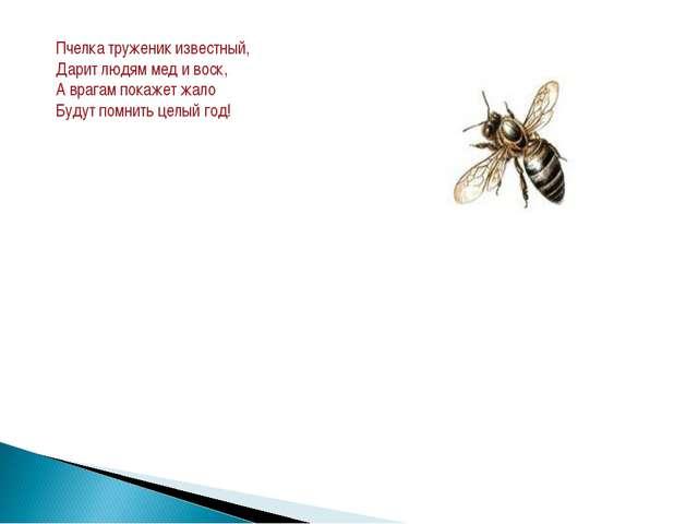 Пчелка труженик известный, Дарит людям мед и воск, А врагам покажет жало Буду...