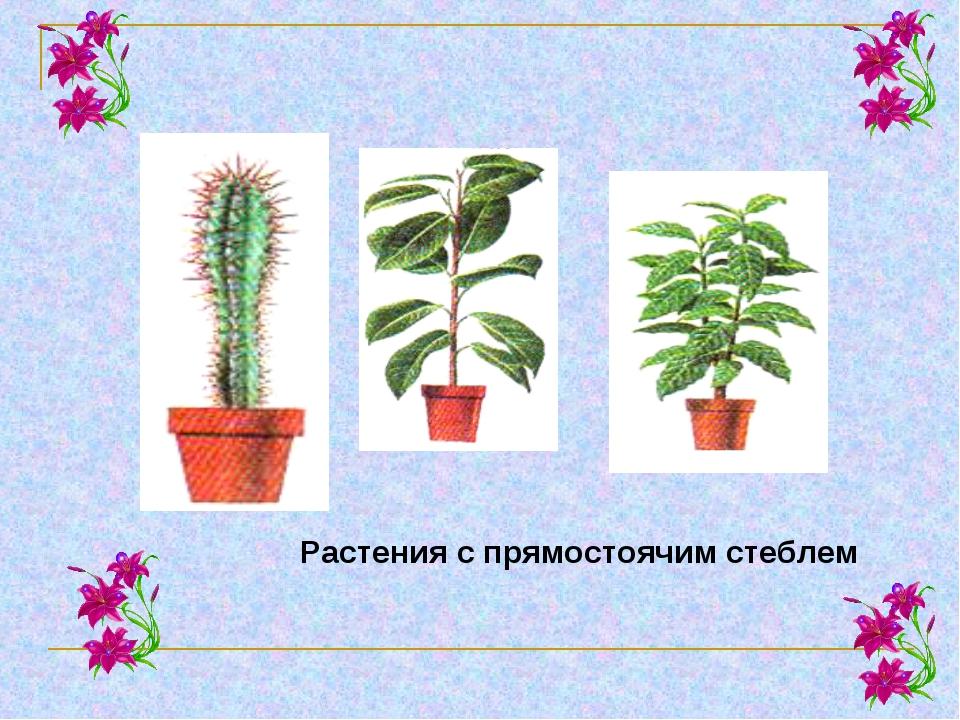 Растения с прямостоячим стеблем