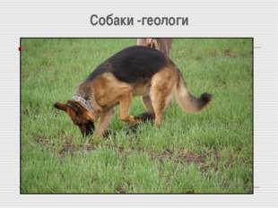Собаки -геологи