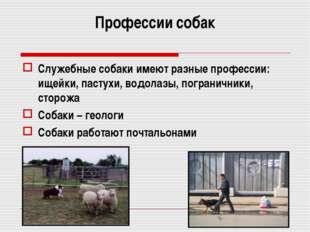 Профессии собак Служебные собаки имеют разные профессии: ищейки, пастухи, вод