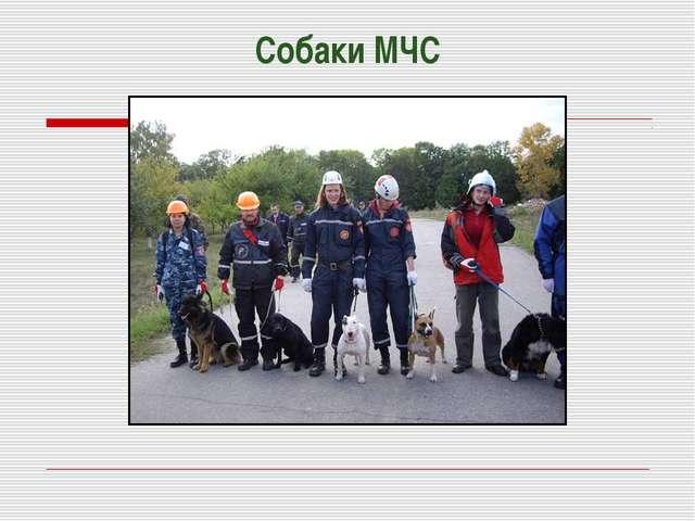 Собаки МЧС