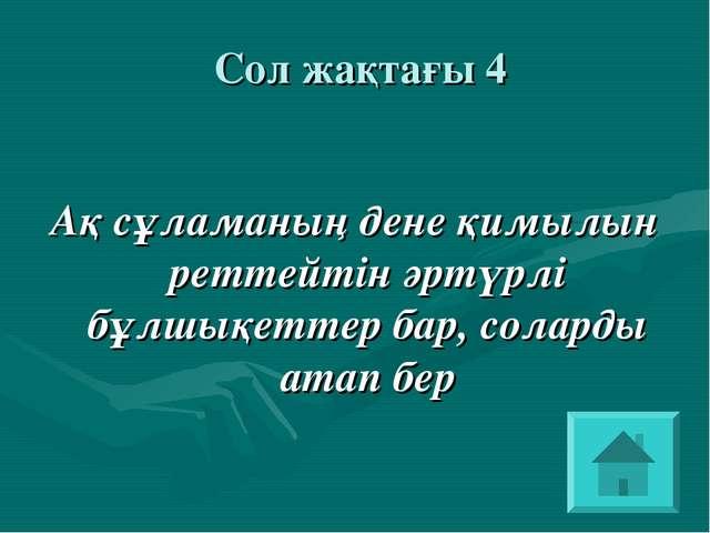 Сол жақтағы 4 Ақ сұламаның дене қимылын реттейтін әртүрлі бұлшықеттер бар, с...