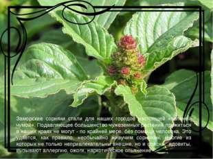 Заморские сорняки стали для наших городов настоящей «зеленой чумой». Подавля