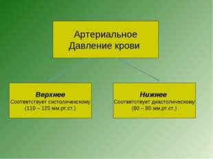 Артериальное Давление крови Верхнее Соответствует систоличекскому (110 – 125