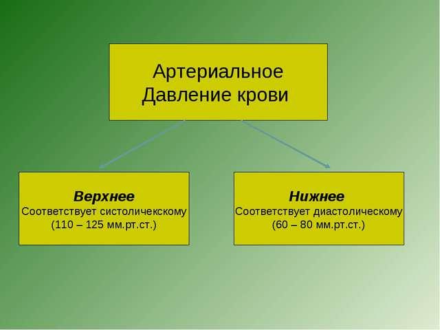 Артериальное Давление крови Верхнее Соответствует систоличекскому (110 – 125...