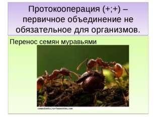 Протокооперация (+;+) – первичное объединение не обязательное для организмов.