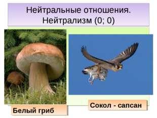 Нейтральные отношения. Нейтрализм (0; 0) Белый гриб Сокол - сапсан