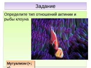 Задание Определите тип отношений актинии и рыбы клоуна Мутуализм (+;+)