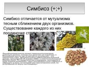 Симбиоз (+;+) Симбиоз отличается от мутуализма тесным сближением двух организ