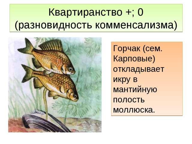 Квартиранство +; 0 (разновидность комменсализма) Горчак (сем. Карповые) откла...