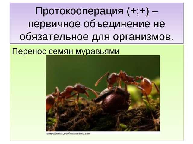 Протокооперация (+;+) – первичное объединение не обязательное для организмов....