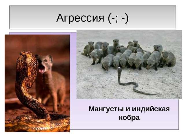 Агрессия (-; -) Мангусты и индийская кобра