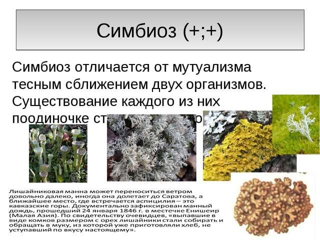 Симбиоз (+;+) Симбиоз отличается от мутуализма тесным сближением двух организ...